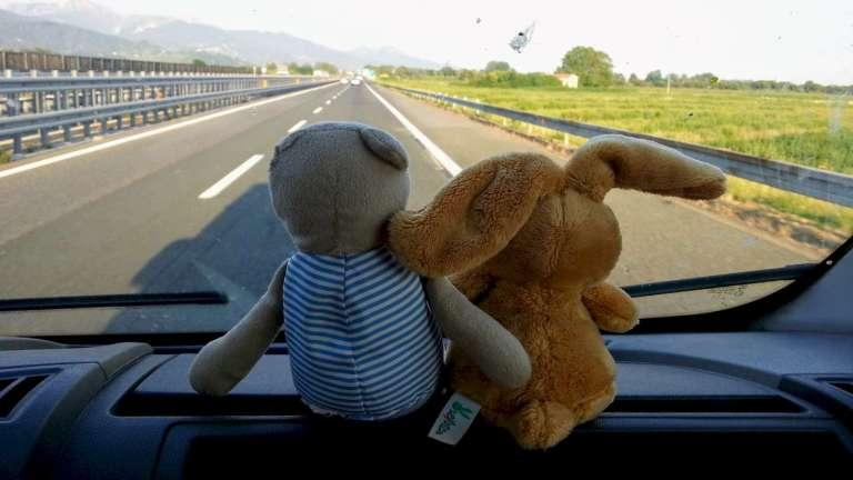 Nuestros compañeros de viaje: Teddy y Orejotas